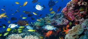 Marine Ecosystems Need Thousands of Years to Recover After ...