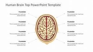 Human Brain Diagram Template
