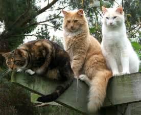 cat 3 same story