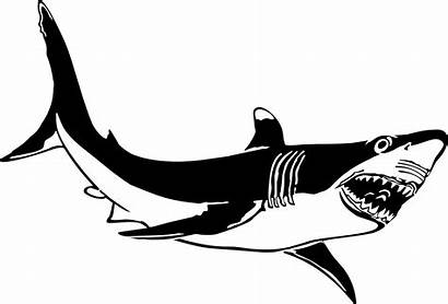 Shark Clipart Clipartpanda Clip Drawings Presentations Websites