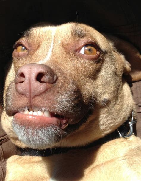 Smiling Dog Meme - funny dog meme smile