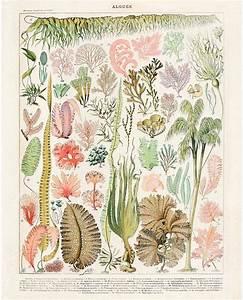 78 best Curious Prints images on Pinterest | Botanical ...