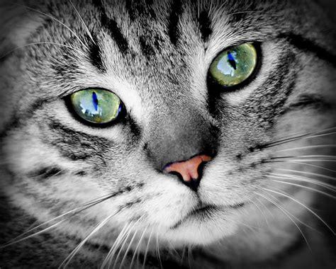 photography  cat  full moon  stock photo