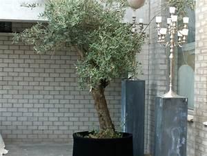 Planter Un Olivier En Pot : pot en bois pour olivier ~ Dailycaller-alerts.com Idées de Décoration