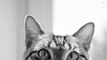 Cat Desktop Hipster Backgrounds Wallpapers Background Computer