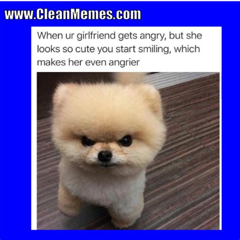 Animal Memes Clean - clean memes 10 12 2017 clean memes the best the most online