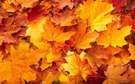 Wallpaper High Resolution Fall Backgrounds by Fall Leaves Backgrounds 183 Wallpapertag
