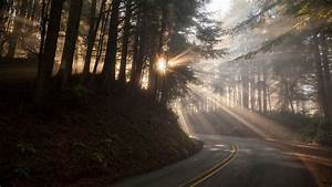 Nature, Road, Trees, Forest, Sun, Rays, Branch, Plants, Mist, Wallpapers, Hd, Desktop, And, Mobile