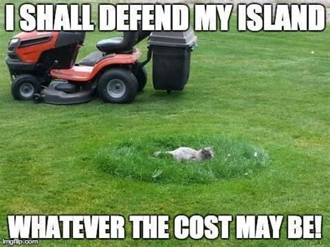 Turf Meme - 58 best lawn humour images on pinterest ha ha funny images and funny stuff