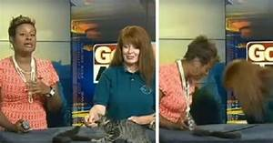 News Anchor Can't Stop Laughing After Excited Kitten Takes ...