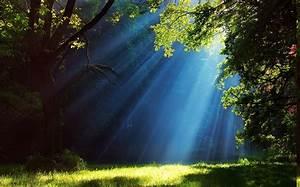 Wallpaper, Sunlight, Trees, Landscape, Waterfall, Grass, Sky, Branch, Green, Blue, Morning