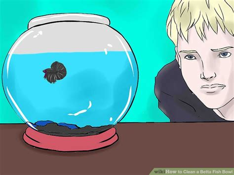 how to clean a fish bowl how to clean a betta fish bowl with pictures wikihow