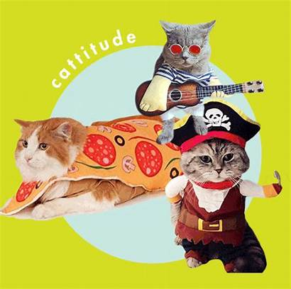 Costumes Halloween Cats Cat Dressed Getting