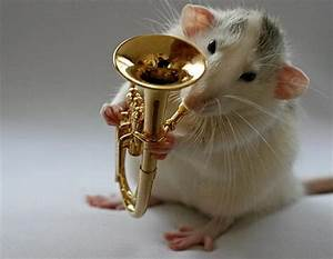 Talented Musical Mice – Way Too Cute – Design Swan