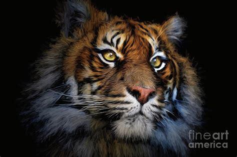 sumatran tiger photograph  sheila smart fine art photography