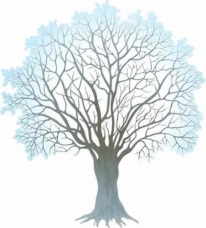 Winter Tree Clip Clipart Transparent Trees Barren
