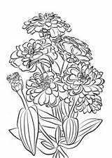 Coloring Zinnia Flowers Age Youth Drawing Printable Categories Supercoloring sketch template