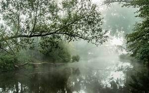 Nature, Landscape, River, Mist, Water, Reflection, Trees