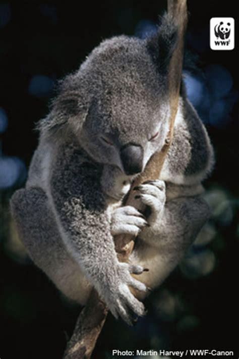 wwf iphone wallpaper world wildlife fund