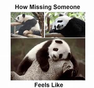 15 Cutest Panda Memes Which Ruled The Internet Viral Slacker