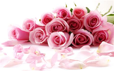 Pink Rose On Valentines Day Wallpaper Wide Wallpaper ...