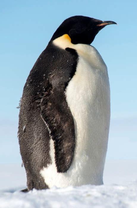 Penguin Happy Feet Zoo