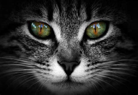 Resultado de imagen de mirada felina