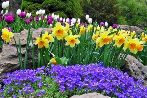 Pictures Of Beautiful Flower Gardens