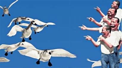Pointing Laughing Swan Finger Sky Clear Desktop
