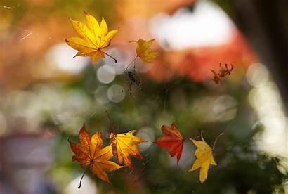 Macro Foliage Bokeh Spider Autumn Web Dog