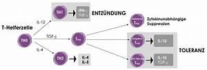 Mikronährstoffe Berechnen : effektorzelltypisierung imd institut f r medizinische diagnostik labor ~ Themetempest.com Abrechnung