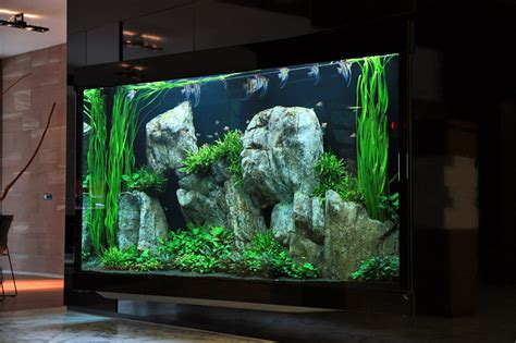 Oliver Knott Aquascaping by 2000 Liter Aquascape By Oliver Knott Photo Oliver Martin