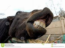 Horse Smile Royalty Free Stock Images Image 24932329