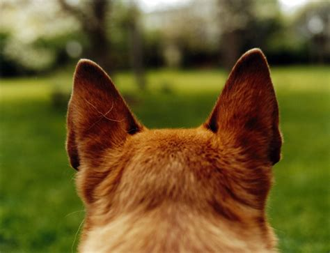 tips  dogs ear care pets grooming prices