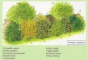 Arbustes Décoratifs à Fleurs : choisir les arbustes pour sa haie jardin et plantes ~ Premium-room.com Idées de Décoration