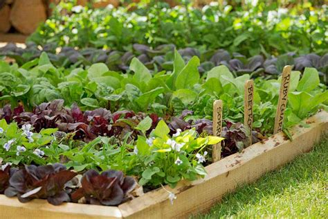 Resources / Rhs Campaign For School Gardening