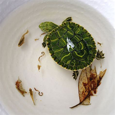 one tiny turtle read and hyper realistic 3d paintings made with acrylics in layers