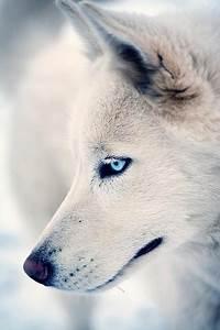dylan o'brien blue eyes | Tumblr