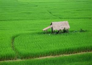 File:2006 1002 nan thailand rice.jpg - Wikimedia Commons