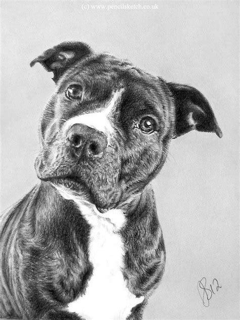boxer pit mix dog drawing animal