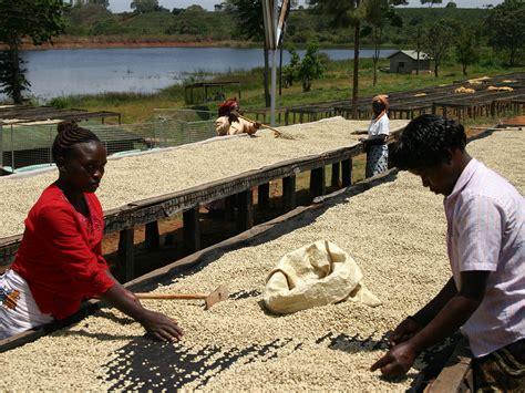 How Coffee Is Processed Around The World Black Rifle Coffee Peppermint Mocha Free Shipping Arizona Ice Pulver Reteta Iced Quality Dealers Zagreb