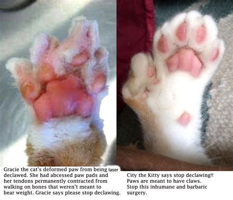 declawing cats cat declawing www pixshark com images galleries with a bite