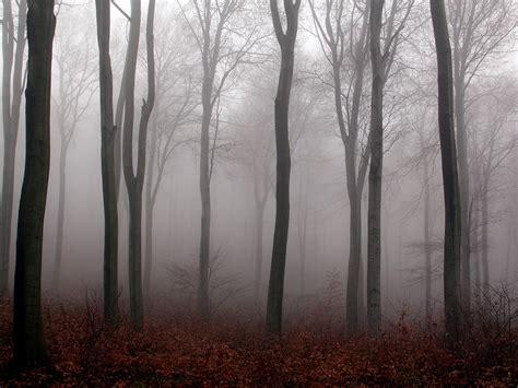 nebel im november nebel im herbstwald 001 kostenloses hintergrundbild