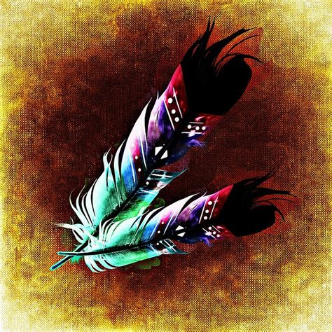 feather bird feathers abstract  image  pixabay