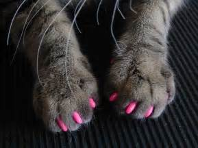cat claws grooming a cat grooming services feline fabulous