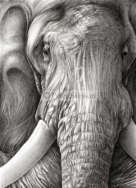 stunning hyper realistic pencil drawings
