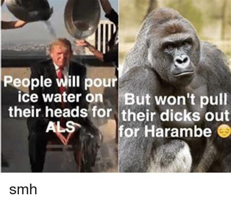 Dicks Out For Harambe Memes - harambe meme dicks out