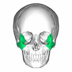 Zygomatic Arch Archives