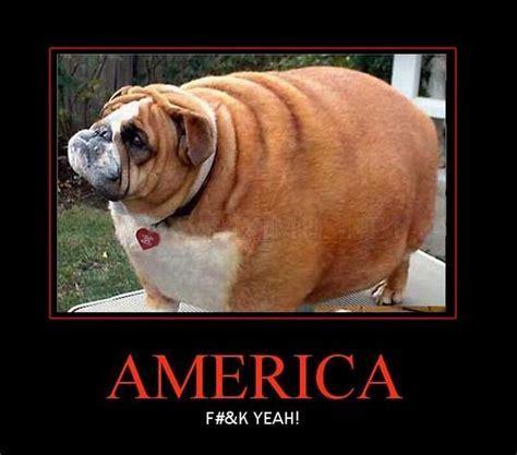 America! F*** YEAH!   Fun