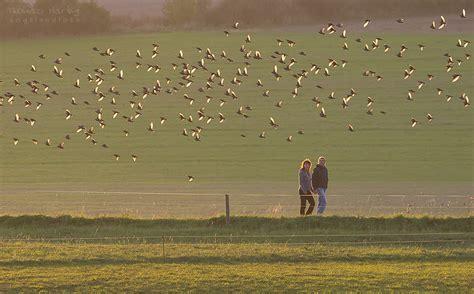 vogelzug forum fuer naturfotografen